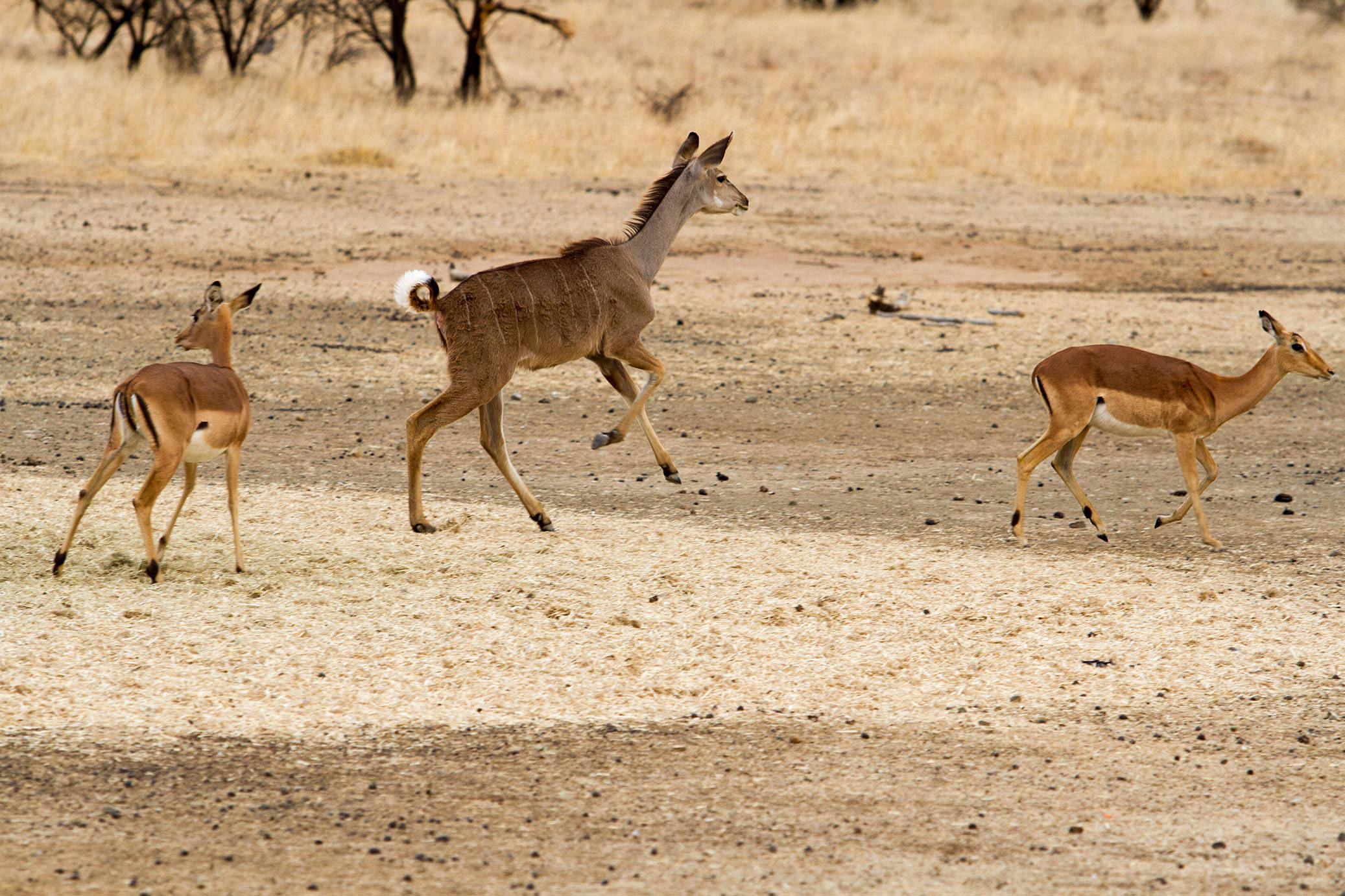 amanzi private game reserve - Bokke 10 - Amanzi Private Game Reserve