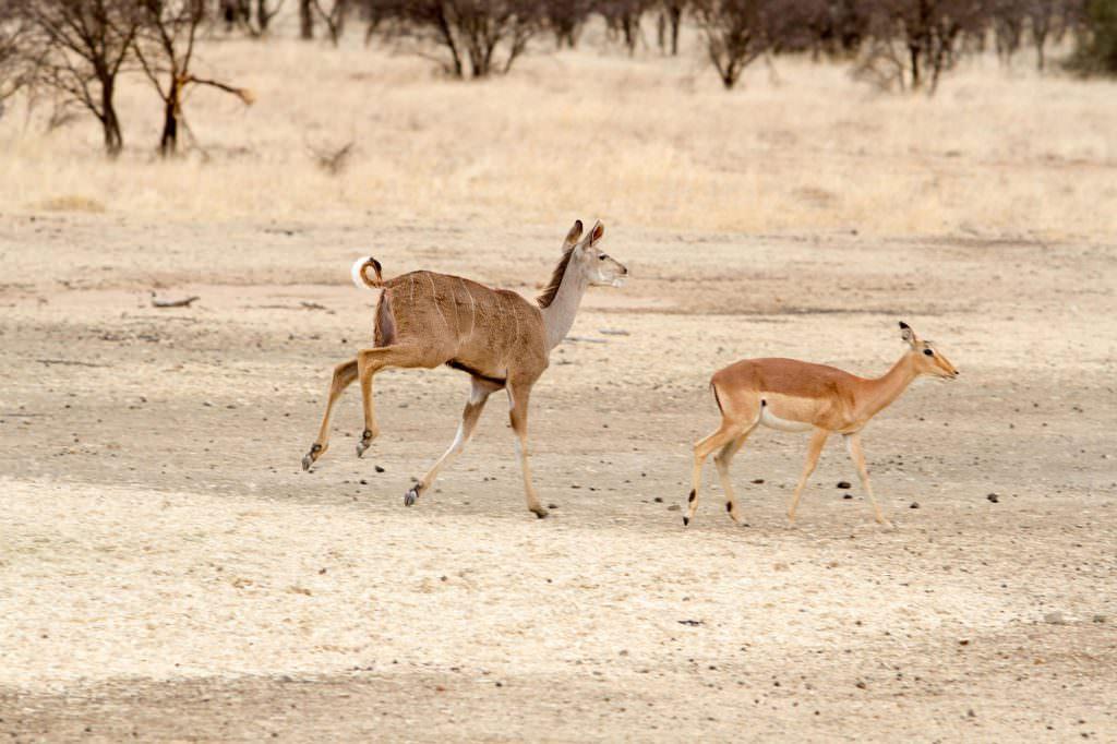 amanzi private game reserve - Bokke 11 1024x682 - Amanzi Private Game Reserve