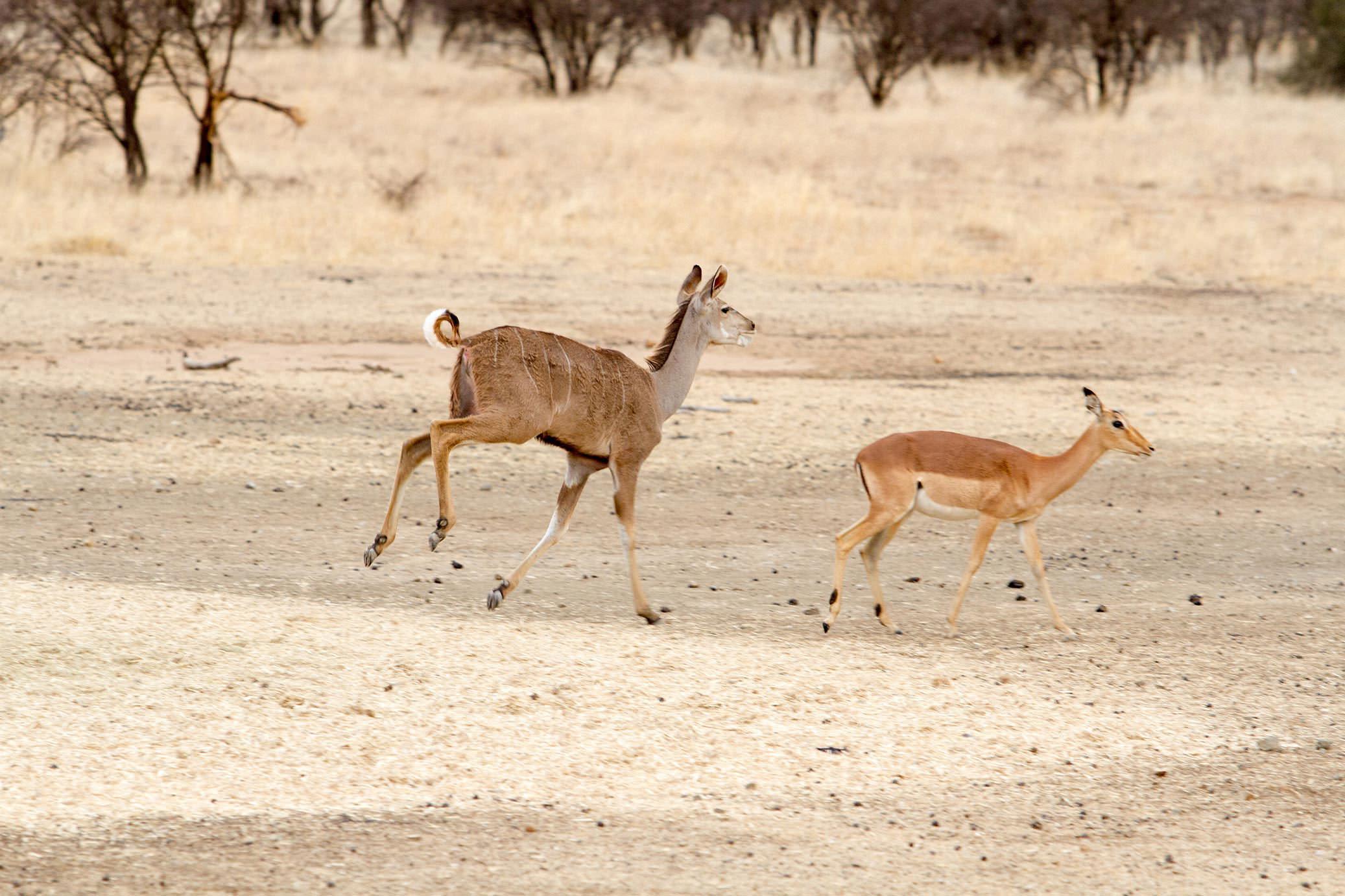 amanzi private game reserve - Bokke 11 - Amanzi Private Game Reserve