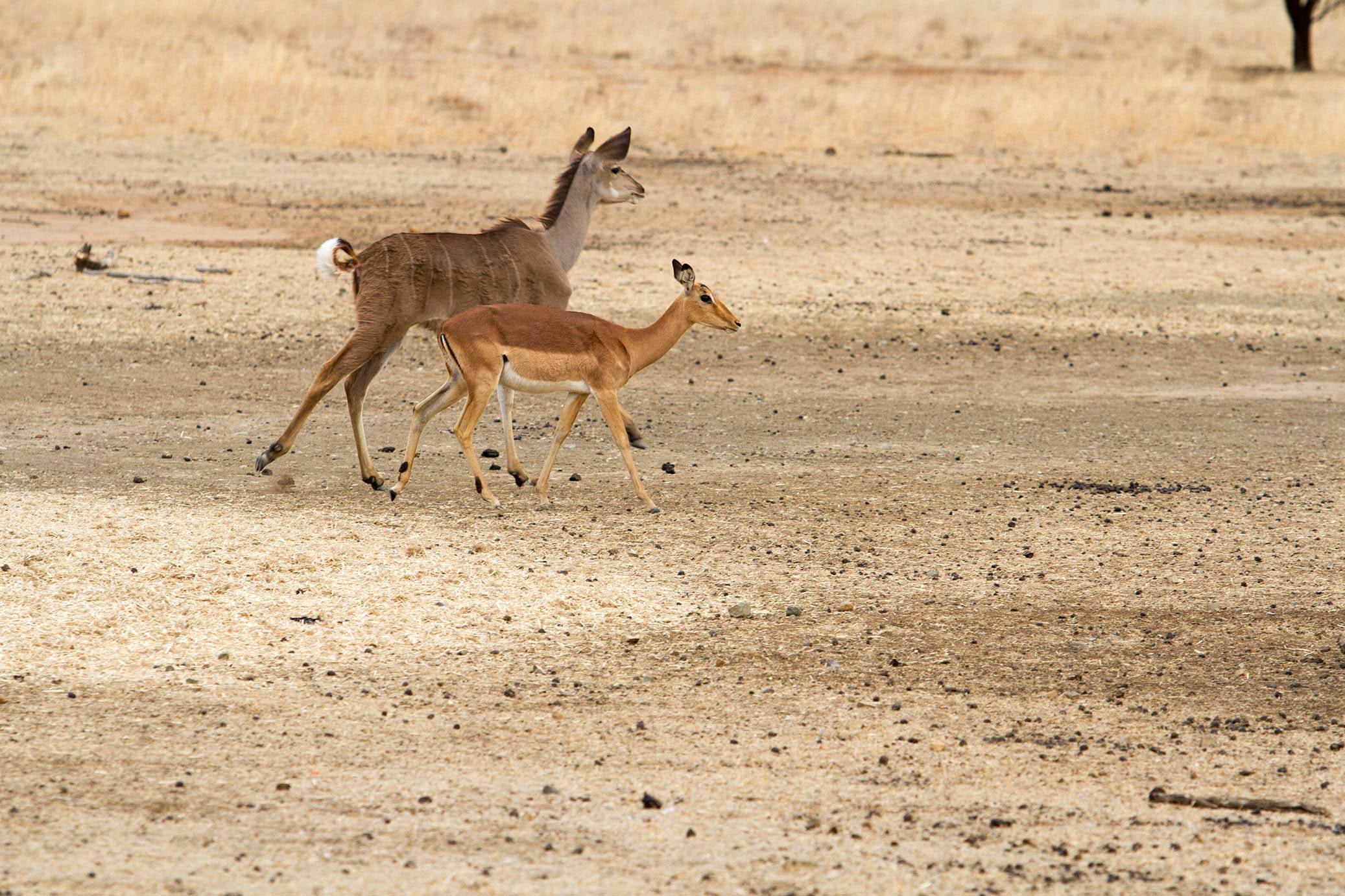 amanzi private game reserve - Bokke 12 - Amanzi Private Game Reserve