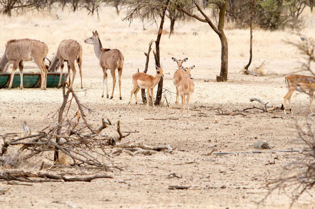 amanzi private game reserve - Bokke 14 1024x682 - Amanzi Private Game Reserve