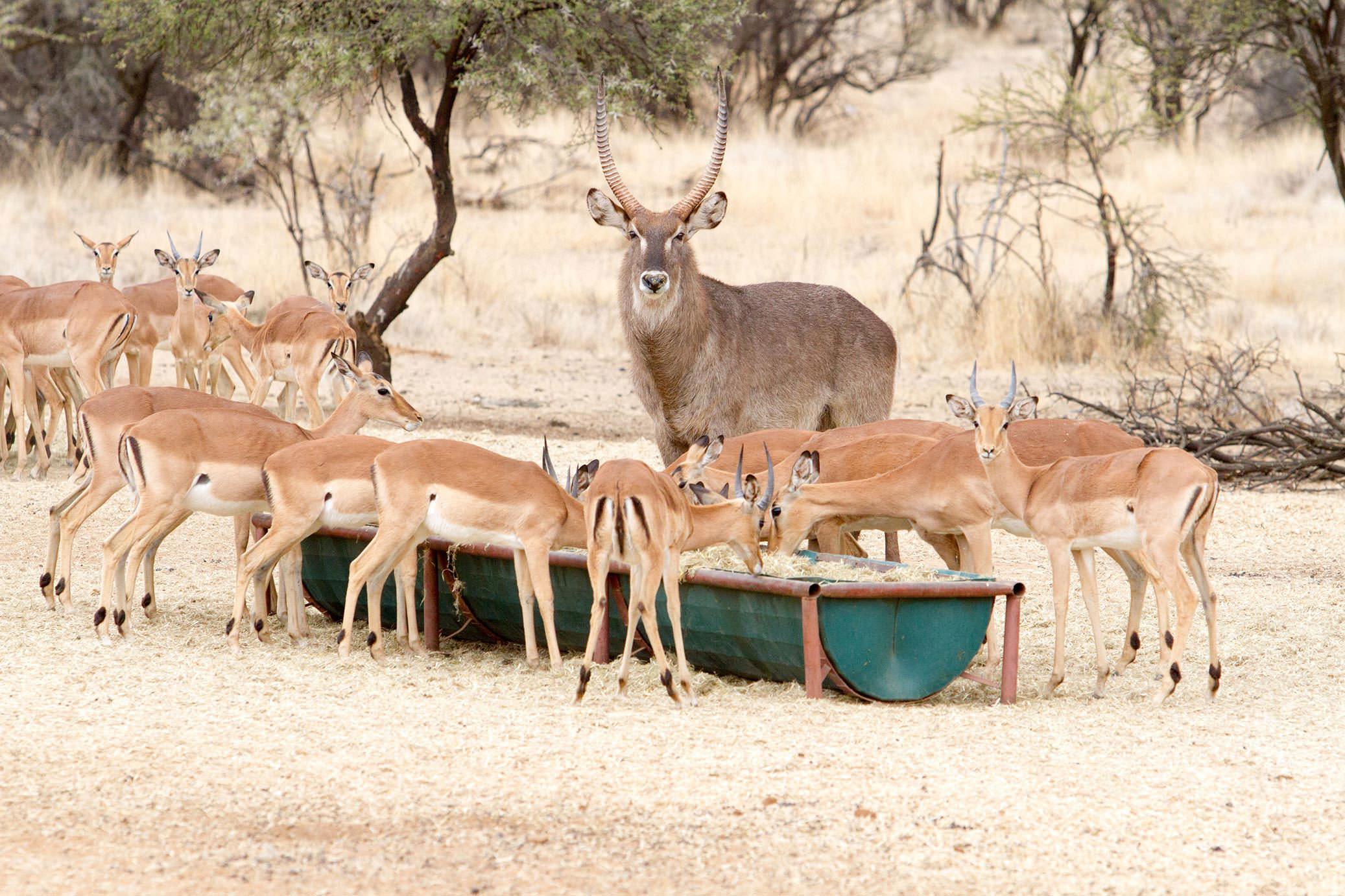 amanzi private game reserve - Bokke 2 - Amanzi Private Game Reserve