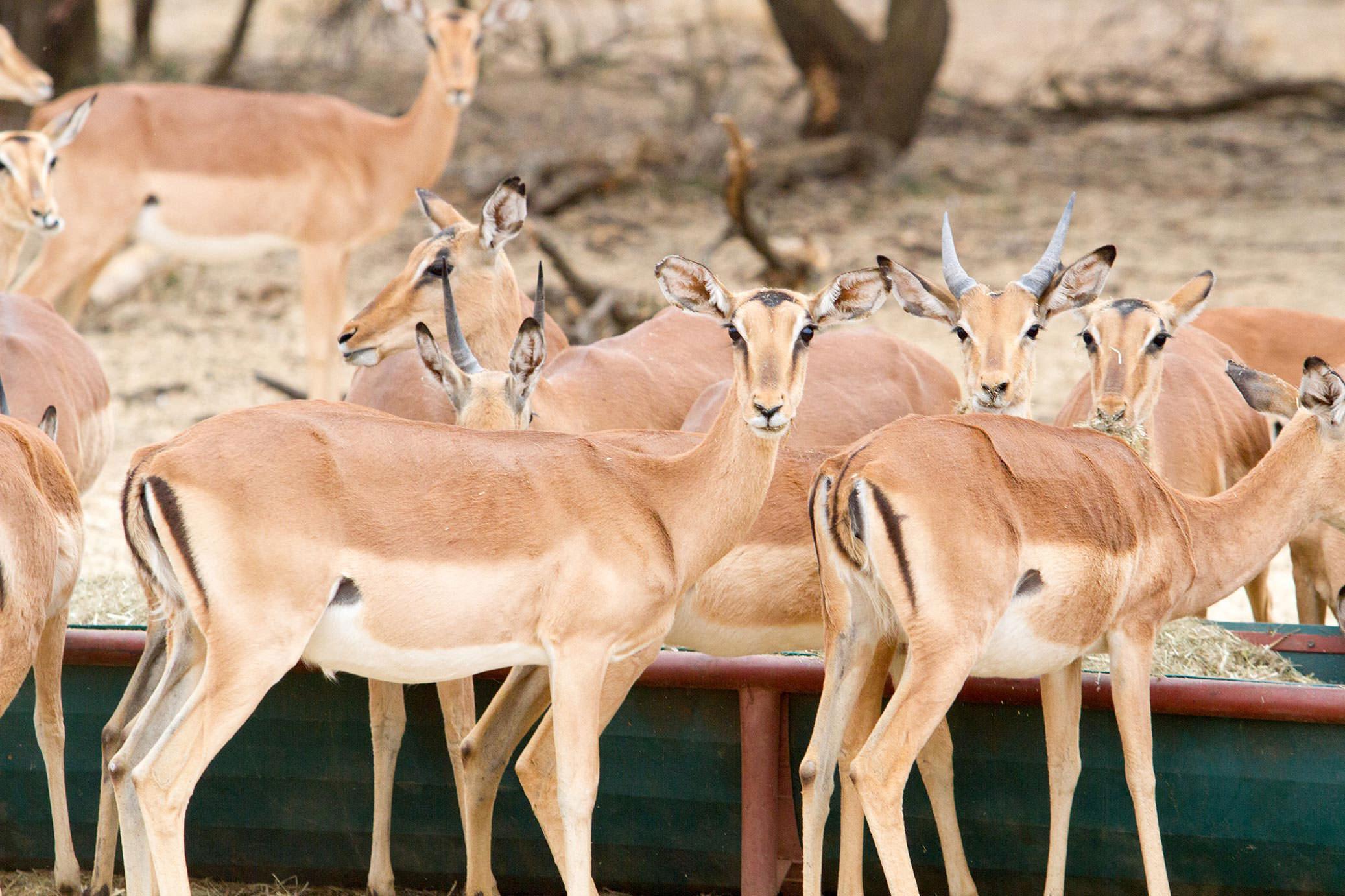 amanzi private game reserve - Bokke 5 - Amanzi Private Game Reserve