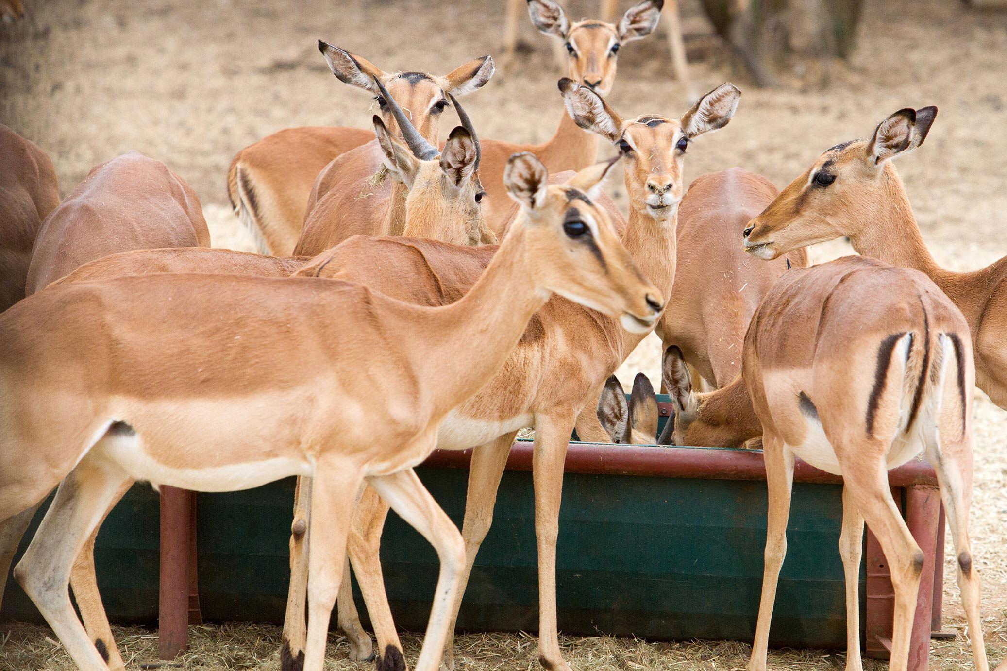 amanzi private game reserve - Bokke 6 - Amanzi Private Game Reserve