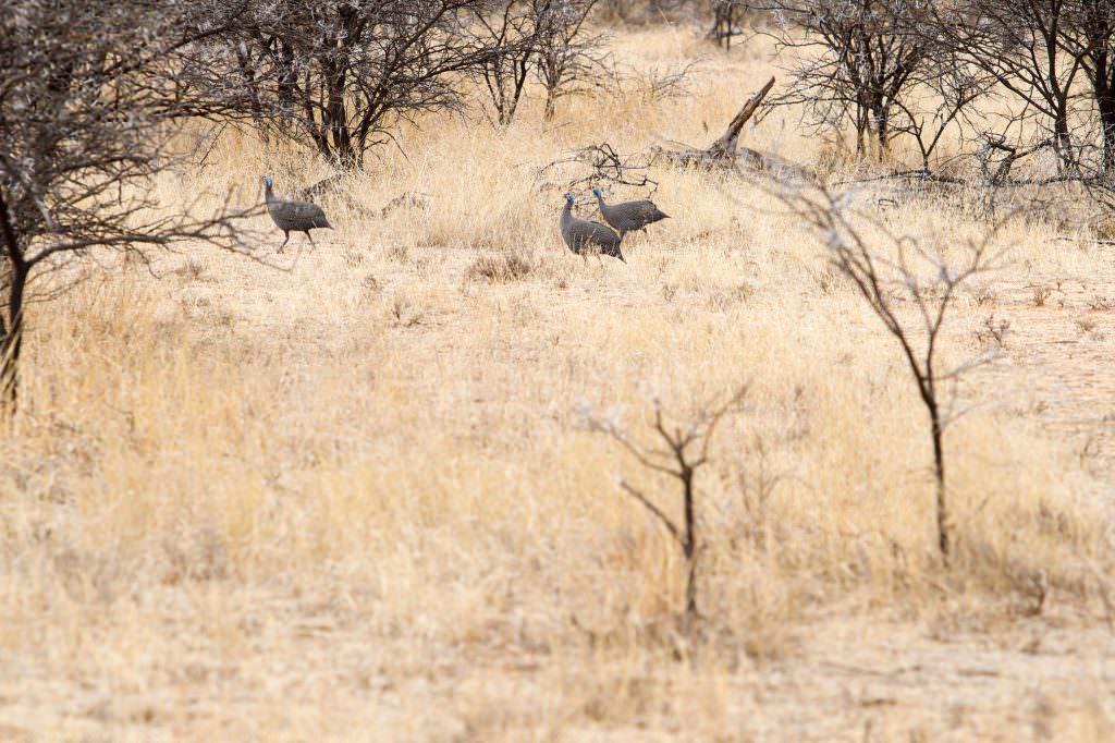amanzi private game reserve - Bokke 7 1024x682 - Amanzi Private Game Reserve